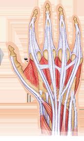 Hand polschirurgie